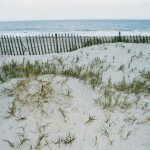Last Large Parcel of Privately Held Alabama Relic Beach Habitat – Focus of Preservation Effort