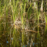 Caring For Your Local Wetland