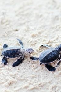 sea_turtes